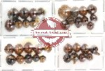 Scientific lot no. 3 Coccinelidae (39 pcs)