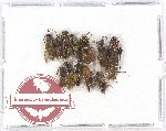 Scientific lot no. 205 Hymenoptera (12 pcs)