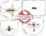 Scientific lot no. 208 Hymenoptera (4 pcs)