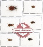 Scientific lot no. 271 Carabidae (6 pcs)