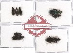 Scientific lot no. 269 Carabidae (8 pcs - 2 pcs A2)