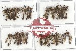 Scientific lot no. 209 Hymenoptera (37 pcs)