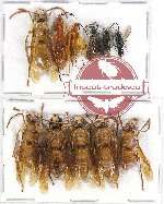 Scientific lot no. 206 Hymenoptera (11 pcs)