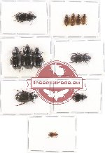 Scientific lot no. 264 Carabidae (12 pcs A, A2)