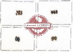 Elmidae sc. lot no. 14A (15 pcs)
