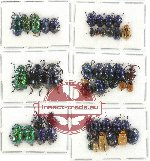 Scientific lot no. 220 Chrysomelidae (48 pcs)
