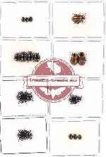 Scientific lot no. 202 Chrysomelidae (16 pcs)