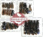 Scientific lot no. 172 Hymenoptera (34 pcs A, A-, A2)
