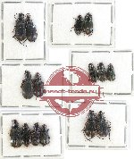 Scientific lot no. 263 Carabidae (15 pcs A, A-, A2)