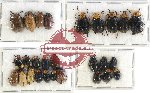 Scientific lot no. 222 Chrysomelidae (27 pcs)