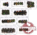 Scientific lot no. 23 Cetoniinae (49 pcs)