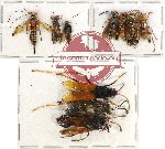 Scientific lot no. 174 Hymenoptera (10 pcs A, A-, A2)
