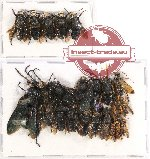 Scientific lot no. 178 Hymenoptera (23 pcs)