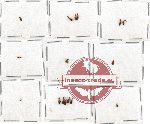 Anthicidae Scientific lot no. 10AB (17 pcs)