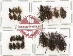 Scientific lot no. 266 Carabidae (23 pcs)