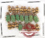 Scientific lot no. 195 Chrysomelidae (23 pcs)
