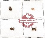 Scientific lot no. 102 Staphylinidae (17 pcs)