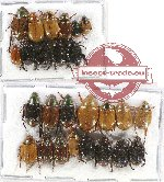 Scientific lot no. 187 Rutelinae (26 pcs)