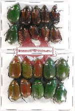 Scientific lot no. 192 Rutelinae (20 pcs A-, A2)