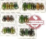 Scientific lot no. 204 Rutelinae (20 pcs A-, A2)