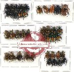 Scientific lot no. 205 Rutelinae (41 pcs)