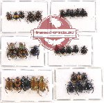 Scientific lot no. 206 Rutelinae (29 pcs)
