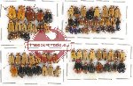 Scientific lot no. 265 Chrysomelidae (78 pcs)