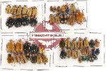 Scientific lot no. 267 Chrysomelidae (53 pcs)