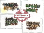 Scientific lot no. 11 Chrysomelidae (87 pcs)