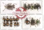 Scientific lot no. 23 Chrysomelidae (19 pcs)