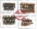 Scientific lot no. 24 Chrysomelidae (73 pcs)