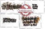 Scientific lot no. 25 Chrysomelidae (66 pcs)
