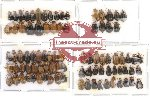Scientific lot no. 37 Chrysomelidae (89 pcs)