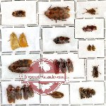 Homoptera Scientific lot no. 1 (23 pcs)