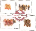 Homoptera Scientific lot no. 4 (22 pcs)