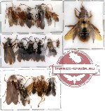 Scientific lot no. 2 Hymenoptera (20 pcs)