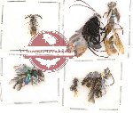 Scientific lot no. 4 Hymenoptera (12 pcs)