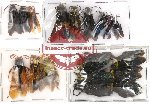 Scientific lot no. 5 Hymenoptera (18 pcs)