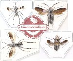 Scientific lot no. 8 Hymenoptera (4 pcs)