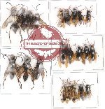 Scientific lot no. 9 Hymenoptera (A2) (22 pcs)