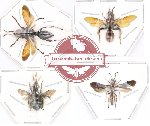 Scientific lot no. 11 Hymenoptera (1 pc A-) (4 pcs)
