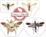 Scientific lot no. 12 Hymenoptera (4 pcs)