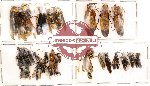 Scientific lot no. 19 Hymenoptera (30 pcs) (A,A-,A2)