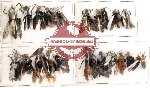 Scientific lot no. 20 Hymenoptera (23 pcs)