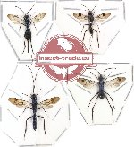 Scientific lot no. 38 Hymenoptera (4 pcs)