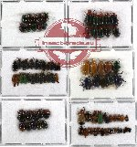 Scientific lot no. 57 Chrysomelidae (88 pcs)