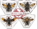Scientific lot no. 47 Eumenidae (4 pcs)