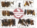 Scientific lot no. 54 Hymenoptera (32 pcs)