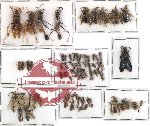 Scientific lot no. 58 Hymenoptera (78 pcs)