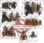 Scientific lot no. 59 Hymenoptera (20 pcs)